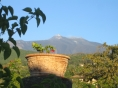 Rooms in the vineyard villa: Mt Etna.